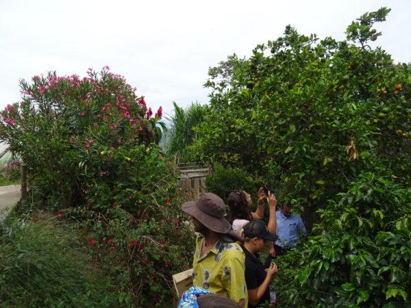 Coffee Nomade - Colombia Antioquia